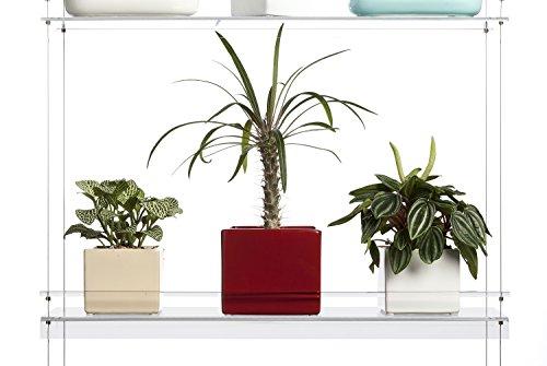 Hanging Window Plant Shelves 4 Shelves Import It All