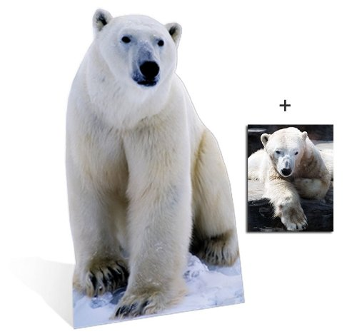 Polar Bear - Wildlife/Animal Lifesize Cardboard Cutout / Standee / Standup - Includes 8x10 (20x25cm) Star Photo