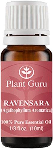 Wild Ravensara Essential Oil. (Agathophyllum Aromatica Madagascar) 10 ml. 100% Pure, Undiluted, Therapeutic Grade.