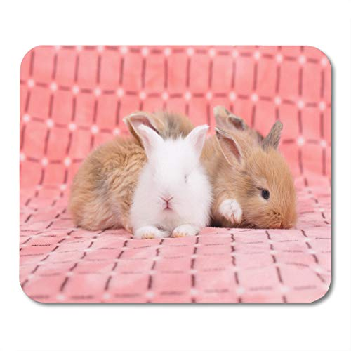 rown 3Weeks Adorable Young Baby Rabbit on Pink As Weeks Old Little Fluffy Bunny Gray Animal Mouse pad 9.5