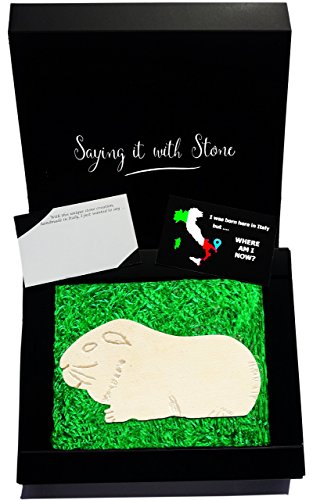 Guinea Pig Handmade in Italy. Elegant gift box with blank message card. Ancient rare Italian stone containing fossil fragments. Furry pets. Symbol of Compassion New Ideas Intelligence & (Cheap Graduation Centerpiece Ideas)