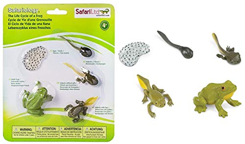 Safari Ltd  Life Cycle of a Frog