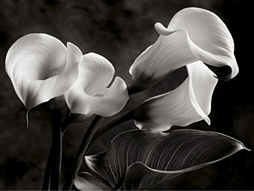 (Calla Lilies No. 1 by Sondra Wampler 16