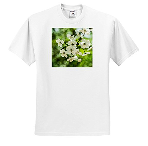 Price comparison product image 3dRose Alexis Photography - Flowers Cherry - Cherry Blossoms, Soft Green Backdrop, Stylized Photo - T-Shirts - Youth T-Shirt Large(14-16) (TS_271722_14)
