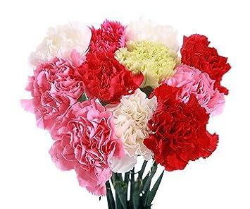 df34e2da7ec4 20 Assorted Carnation Stems with Fern  Amazon.co.uk  Garden   Outdoors