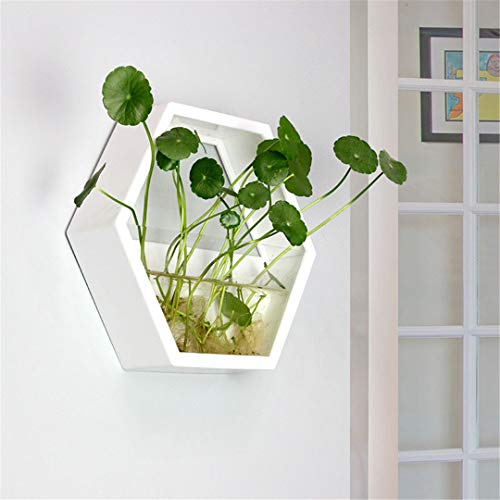 Jiaju-art Hexagon Wall Hanging Acrylic Vase,Wall Acrylics Fish Tank,Wall Decor,Home Decor/House Ornament/Green Gifts for Her White 24x21cm