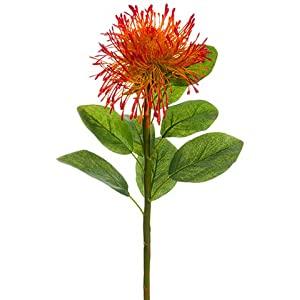 "27"" Pinchushion Protea Spray Orange Red (pack of 12) 9"