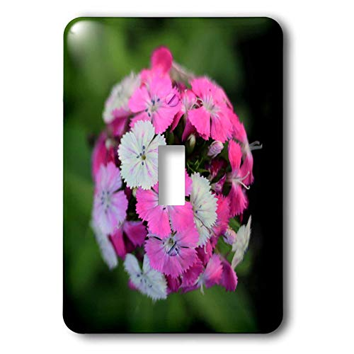 3dRose Stamp City - flowers - Close up photo of dianthus barbatus - Sweet William in shades of pink. - 2 plug outlet cover (lsp_308721_6) ()