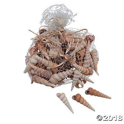 Fun Express Natural Turritella Shells - Approx 70 pcs - 2 1/2