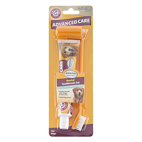 Arm-Hammer-Advanced-Pet-Care-Toothbrush-Toothpaste-Set-for-Dogs-Vanilla-Ginger-Flavor