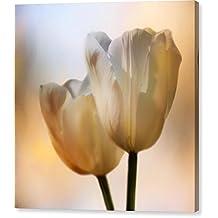 """Tulip Pair"" by Nikolyn McDonald, Canvas Print Wall Art, 20"" x 20"", Mirrored Gallery Wrap, Glossy Finish"