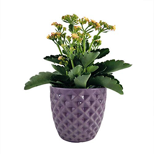 Better-way Diamond Round Ceramic Orchid Flower Container Succulent Planter Plant Pot Windowsill Contemporary Home Decoration (5.5 inch, Dark Purple)