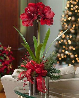 Amazon amaryllis silk flower arrangement red home kitchen amaryllis silk flower arrangement red mightylinksfo