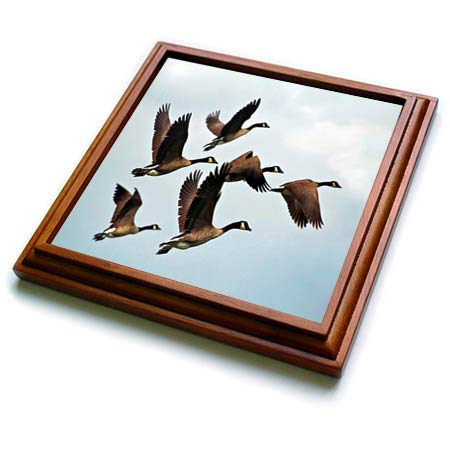 (3dRose lens Art by Florene - Birds II - Image of Group Of Flying Canadian Geese - 8x8 Trivet with 6x6 ceramic tile (trv_306865_1))
