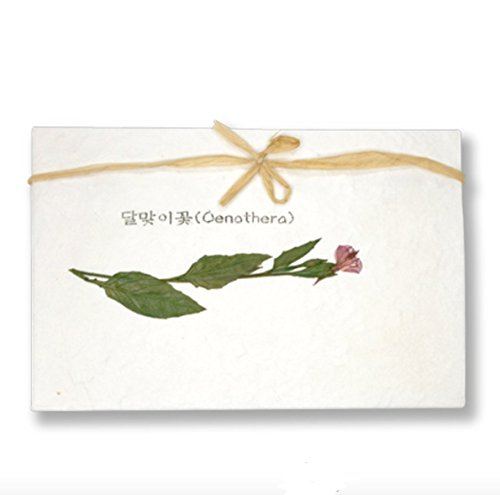 Pressed Flower Card - Silver J Pressed flower card, natural dried red cosmos, handmade blank greeting card