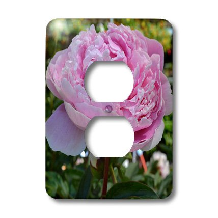 3dRose lsp_27930_6 Pink Peony Floral Outlet Cover Multi-Color (Outlet Cover Floral)