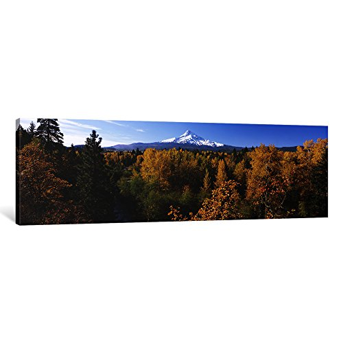 iCanvasART 1 Piece Cottonwood Trees in a Forest, Mt Hood, Hood River, Mt. Hood National Forest, Oregon, USA Canvas Print by Panoramic Images, 16 x 48 x ()