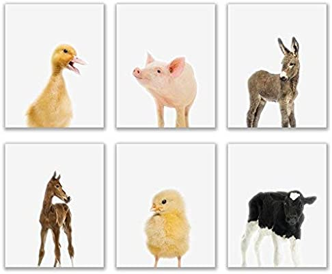 Crystal Baby Farm Animals Poster Prints - Set of 6 (8x10) Adorable ...
