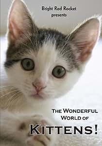 The Wonderful World of Kittens!