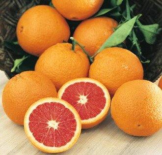 Citrus Care - 7