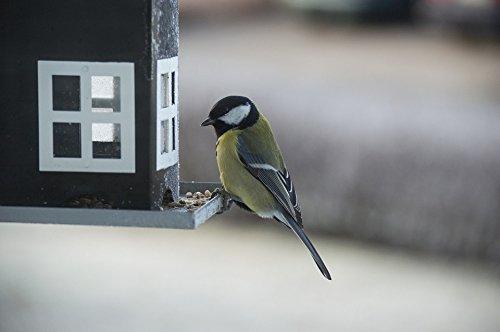 - Home Comforts Acrylic Face Mounted Prints Seed Bird Food Bird Table Bird Small Birds Feeding Print 24 x 36. Worry Free Wall Installation - Shadow Mount is Included.