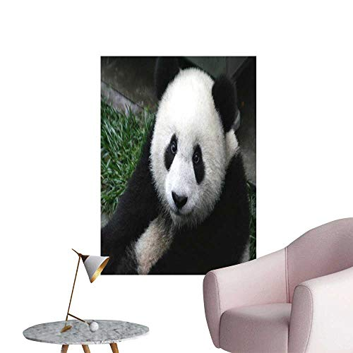 """SeptSonne Wall Decals The Lovely Panda Environmental Protection Vinyl,16"""" W x 24"""" L"""