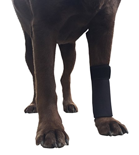 Labra Co. Dog Canine Front Leg Compression Wrap Sleeve Protects Wounds Brace Heals and Prevents Injuries and Sprains Helps with Loss of Stability caused by Arthritis (Large/Extra Large)