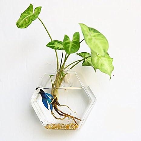 TOPmountain Colgando creativa Plantador de la flor de cristal Florero Terrario de contenedores Inicio Fiesta de jardin pared Decoración: Amazon.es: Hogar