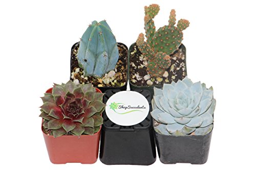 shop-succulents-cactus-and-succulent-collection-of-4