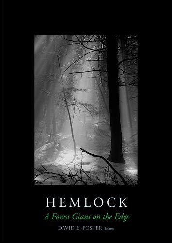 Forest Edge - Hemlock: A Forest Giant on the Edge