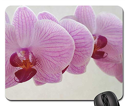 Phalaenopsis Spray (Mouse Pads - Orchid Phalaenopsis Flower Blossoms Pink Flower)