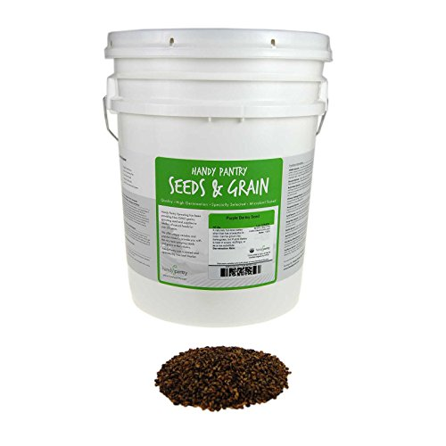 Purple Barley Seeds - Certified Organic - 35 Lb Bucket - Handy Pantry Brand - Also Called Black Barley - No Hull - For Barleygrass, Grind for Flour, Food Storage, Soups & More by Handy Pantry (Image #4)
