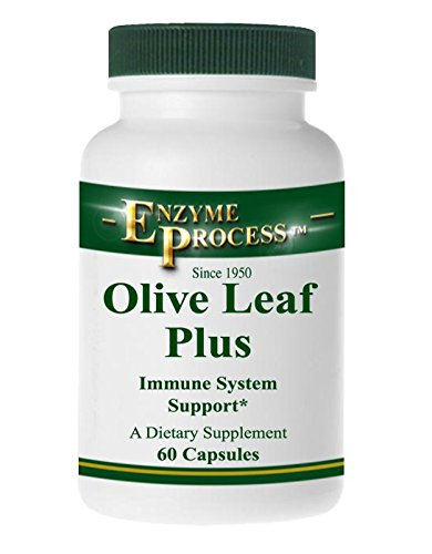 Enzyme Process - Olive Leaf Plus - Herbal Supplement - Immune System Support (60 Capsules)