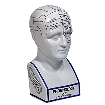 Authentic Models, Phrenology Head, Vintage-Inspired Home Decor - Polished White