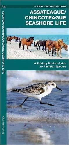 Assateague/Chincoteague Seashore Life: A Folding Pocket Guide to Familiar Species (A Pocket Naturalist - Stores Ct Waterford In