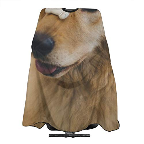 - Hueale Adult Golden Retriever with Cookie Bone On Nose Personalized Custom Professional Hair Salon Apron, Polyester Hair Shawl 55