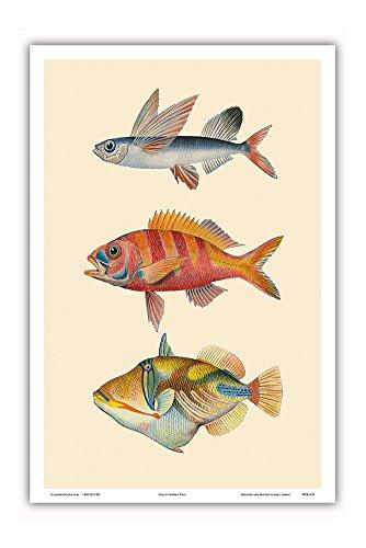Fish of Hawaii Triptych - Flying Fish (Malolo), Hawaiian Ruby Snapper Onaga (Ula'ula), Reef Triggerfish (Humuhumunukunukuapua'a) - Vintage Color Postcard - Master Art Print - 12 x 18in