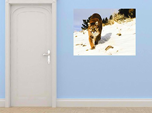 Design With Vinyl Cryst 276 529 As Seen Mountain Lion Win...