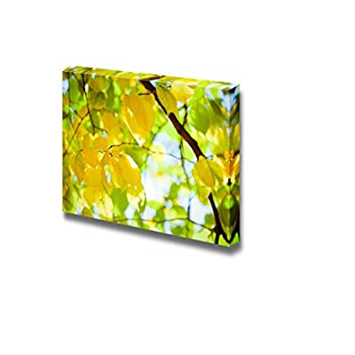 Dazzling Piece of Art, Yellow Autumn Leaves on The Tree with Sunlight Wall Decor, Crafted to Perfection