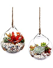 Ivolador Set of 2 Pcs 4.7 Inches Hanging Planter Glass Terrarium Container Air Plant Holder Succulents Globe Shape Home Garden Decor