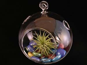 Interior Trading aire planta burbuja bola de cristal terrario Kit con pantalla de colores