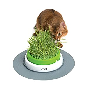 Catit Senses 2.0 Grass Planter 17
