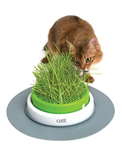 Catit Senses 2.0 Grass Planter from Catit