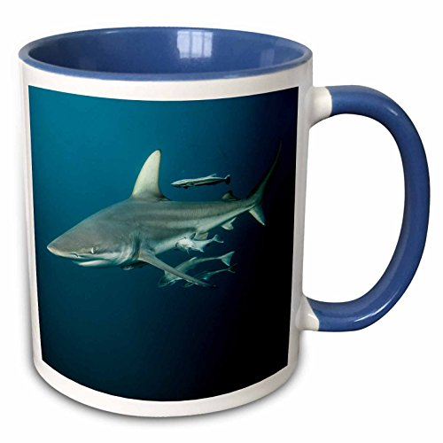 3dRose Danita Delimont - Sharks - Oceanic Black-tip shark and Remora, KwaZulu-Natal, Africa - 15oz Two-Tone Blue Mug (mug_225120_11)