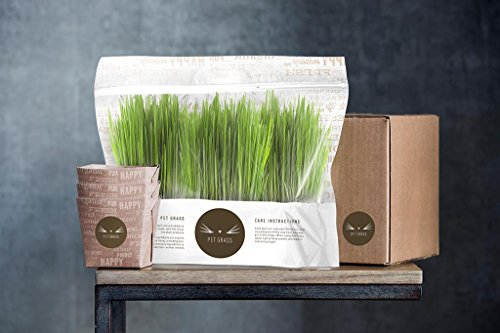 Pet Grass - 100% Organic Fresh Cat Grass Delivery Comes in an Already Grown 3 Pack, Delivered Fresh to Your Door! Sourced and Grown in The USA. from Pet Grass