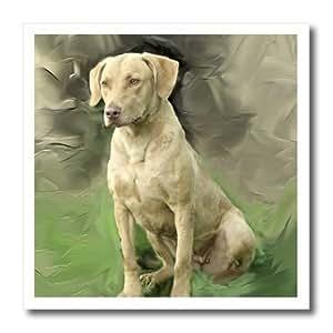 ht_4115_1 Dogs Chesapeake Bay Retriever - Chesapeake Bay Retriever - Iron on Heat Transfers - 8x8 Iron on Heat Transfer for White Material