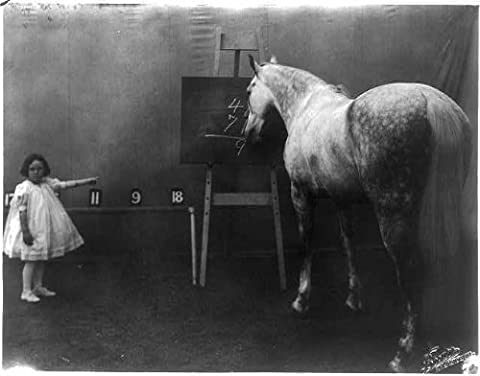 Photo: Prince Albert, Cuthbertson famous educated horse,c1909 (Educated Horses Vinyl)