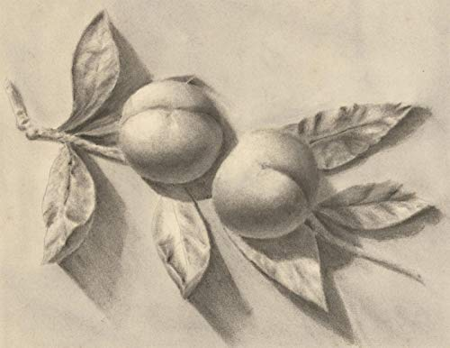 Early 20th Century Charcoal Drawing - Still Life, Study of Apricots 20th Century Still Life