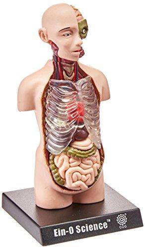 نشانه های زیستی آناتومی نیم تنه انسان [TeDCo] |