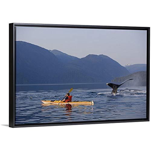 - John Hyde Floating Frame Premium Canvas with Black Frame Wall Art Print Entitled Man Sea Kayaking Near Swimming Pod of Humpback Whales, Southeast Alaska 48
